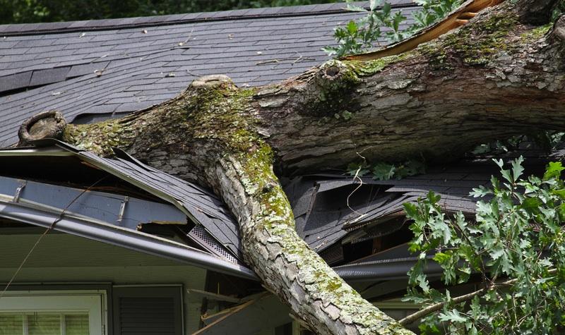 Tree Fell on Roof