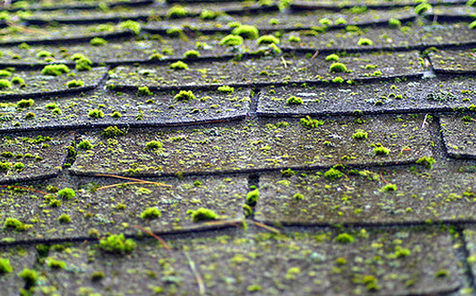 Roof Inspection Services - Moss Growth